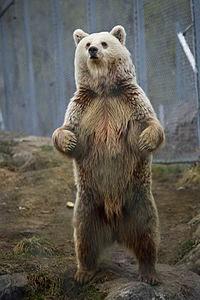 a bear's body