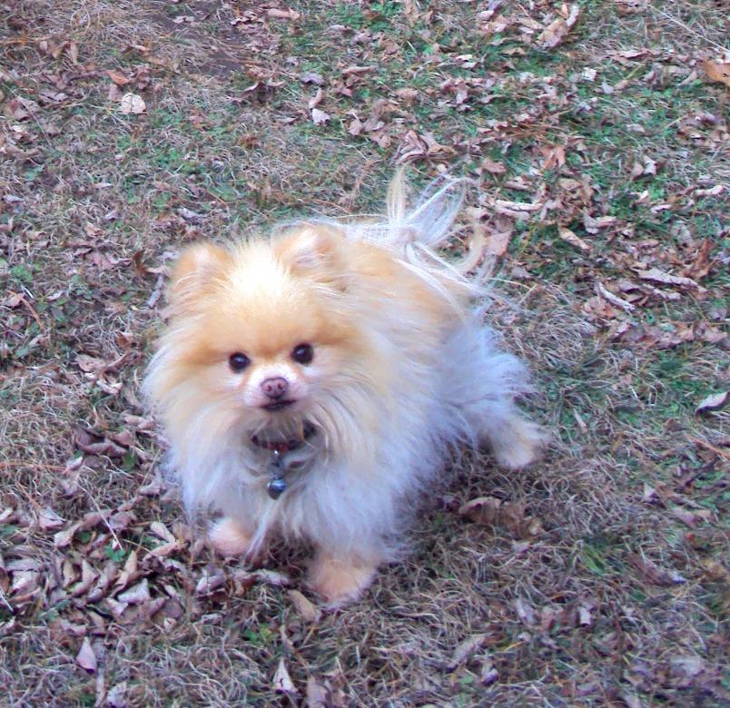 ottawa valley dog whisperer don t give your dog