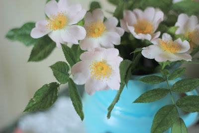 цветущий шиповник, цветы шиповника, шиповник