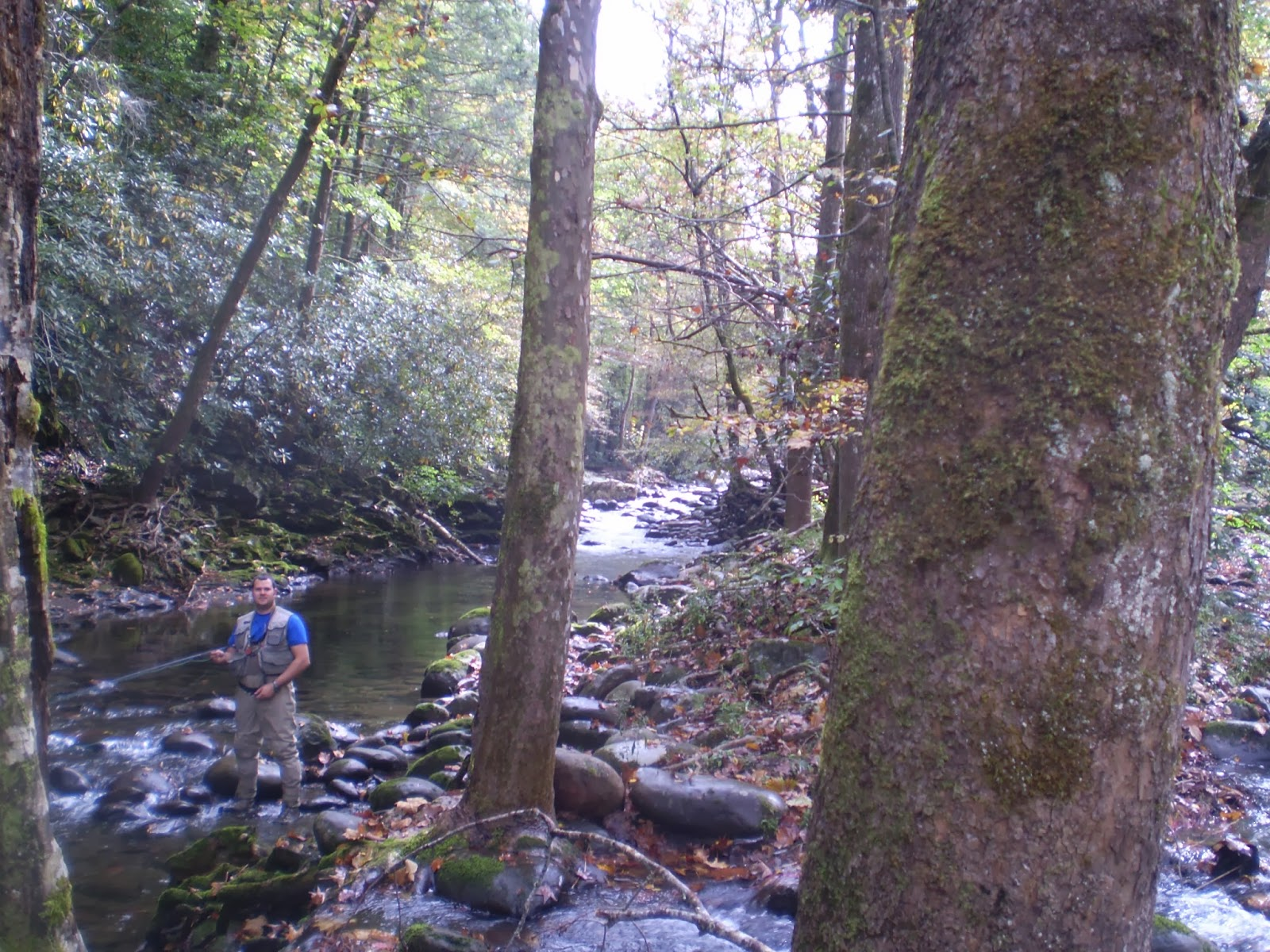 Fly fishing the west with howard fly fishing in the smoky for Fly fishing smoky mountains