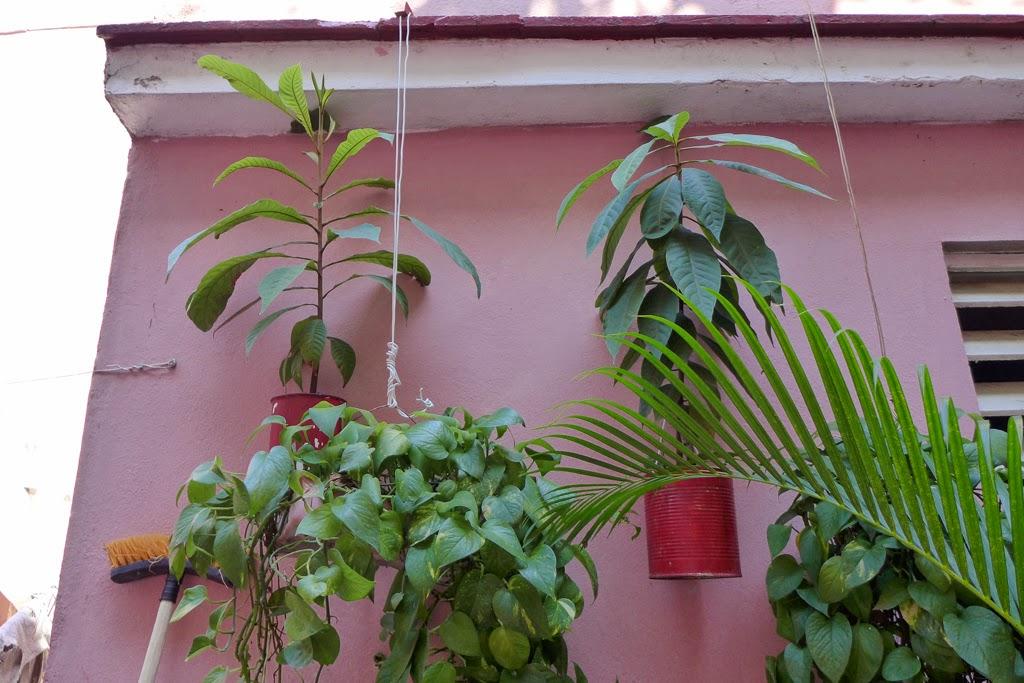 Santiago de Cuba pink house