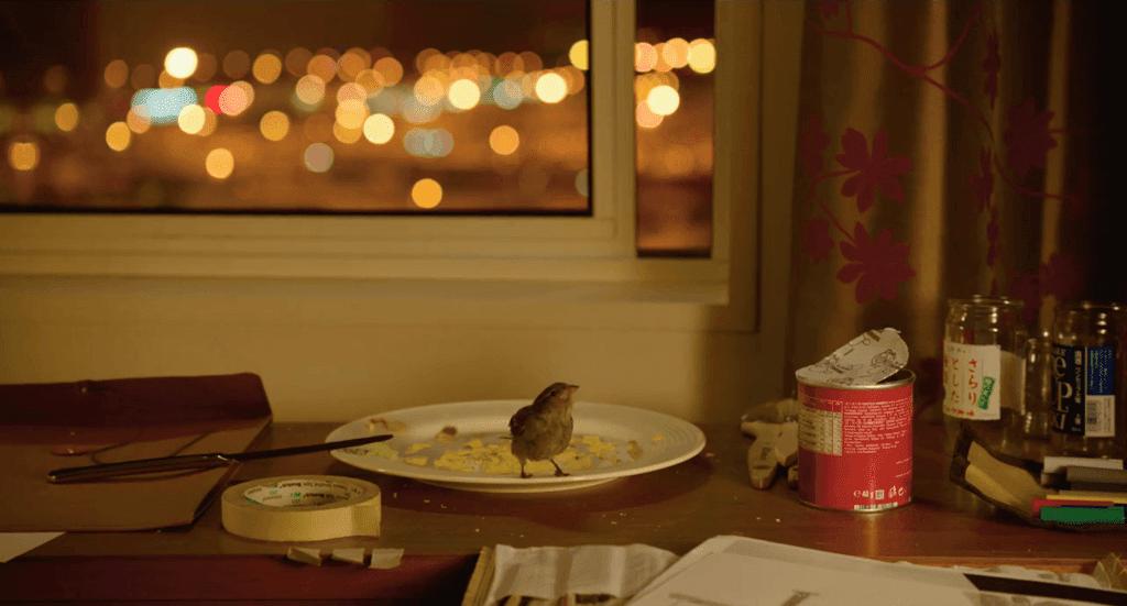 bird people-kus insanlar