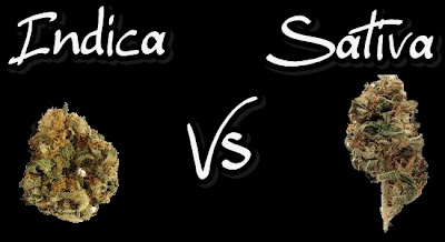 Sativa vs Indica for Pain http://professional.patrickneyman.com/_borders/19/indica-vs-sativa-high-effects