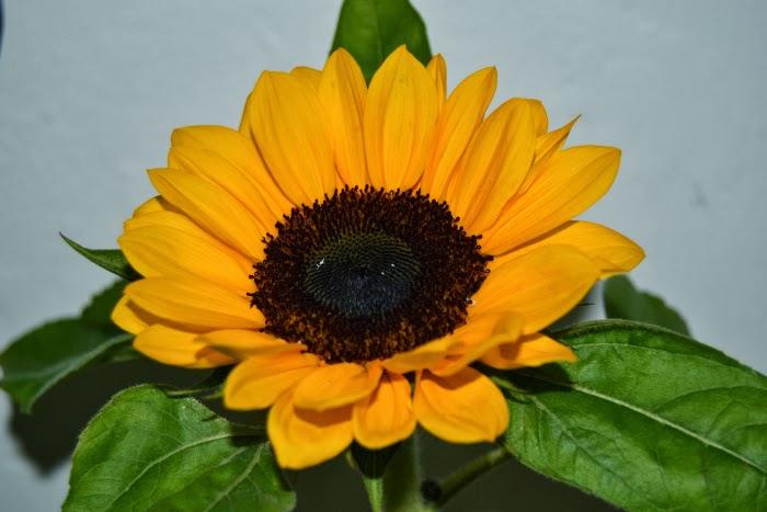 decoracion_hogar_home_deco_flores_blanco_negro_nudelolablog_16