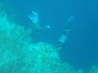 balicasag coral reef