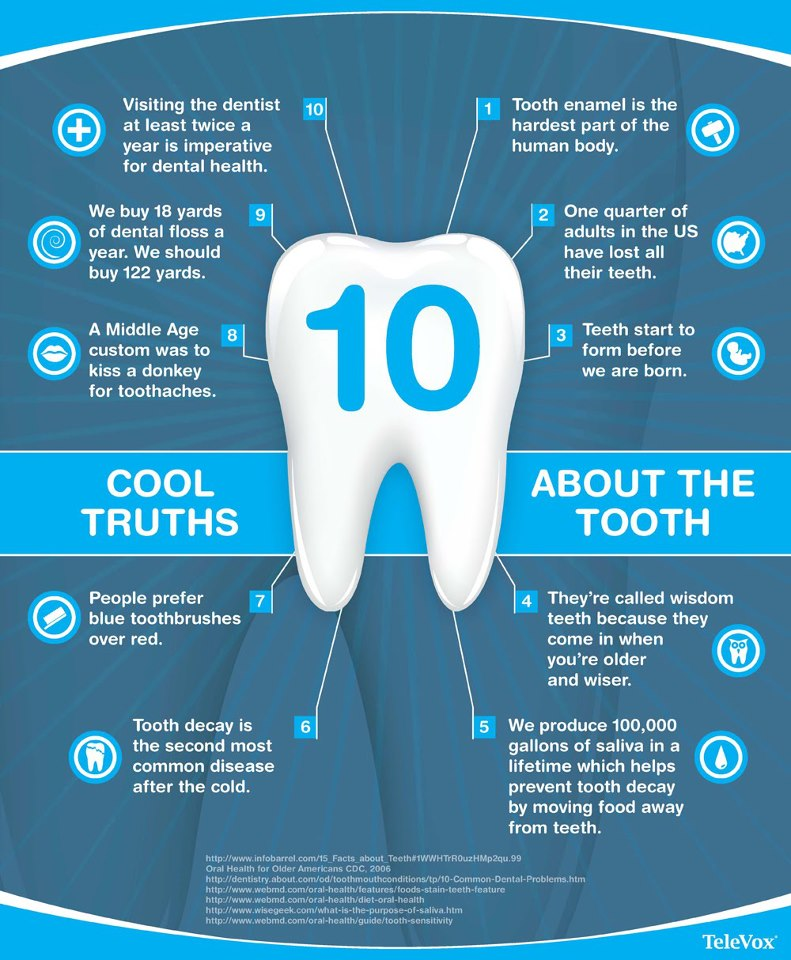 Mesa Family Dentist Cool Dental Facts on Ur Facts For Kids