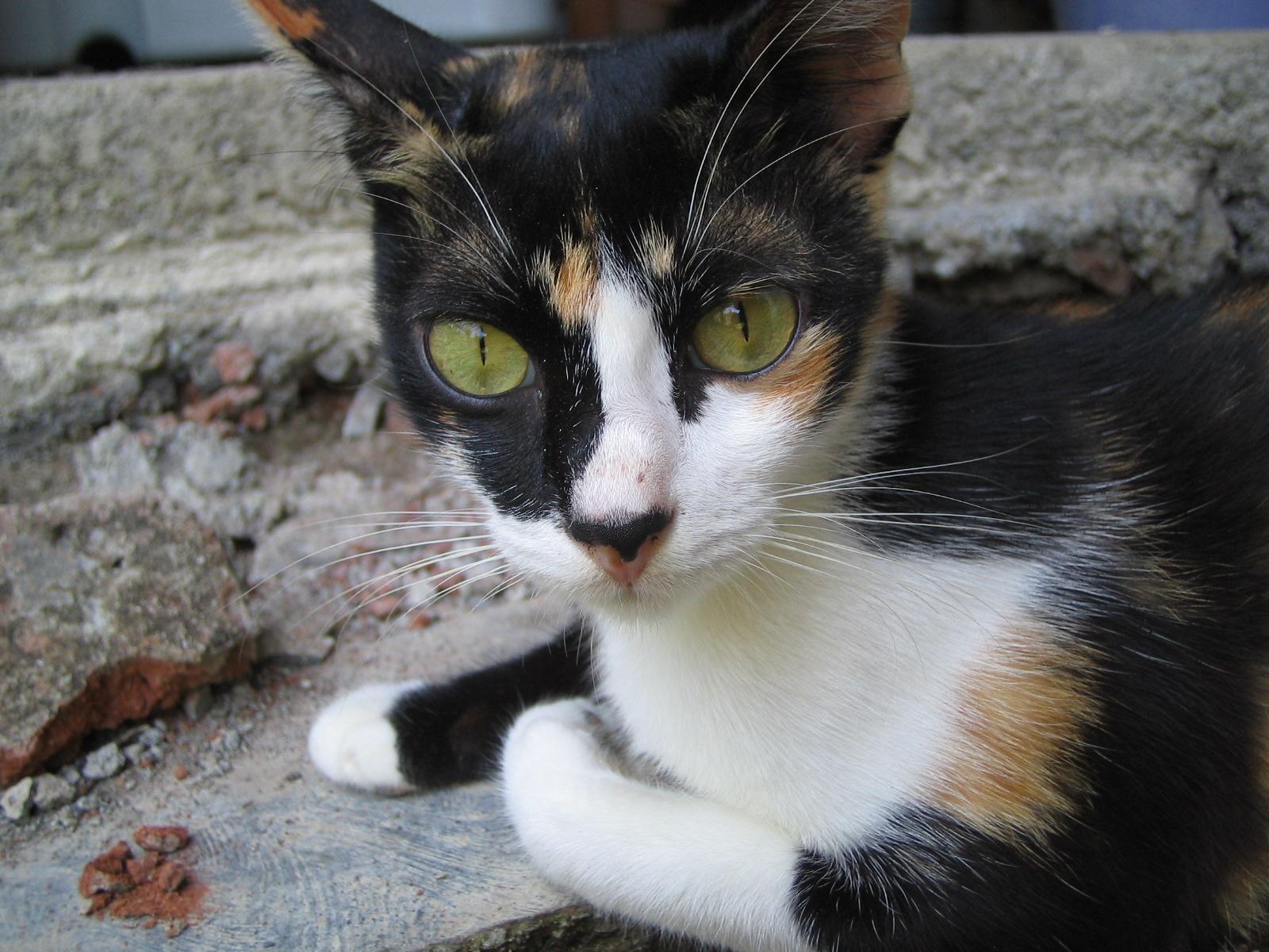 Kie Kisah Kucingku