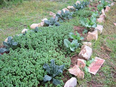 Χειμερινά λαχανικά
