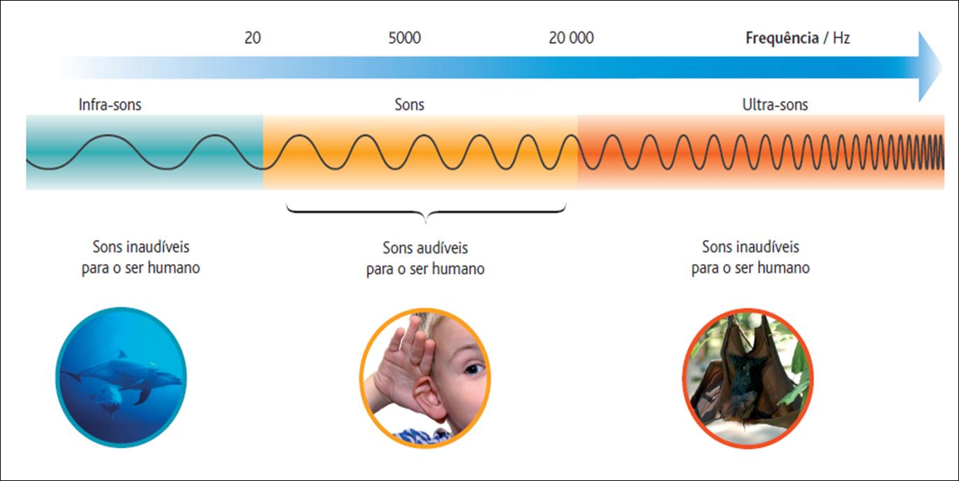Image result for ouvido humano audição frequencias
