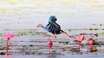 Fotografías de aves exóticas by Sasi Smit (pajarillos de colores)