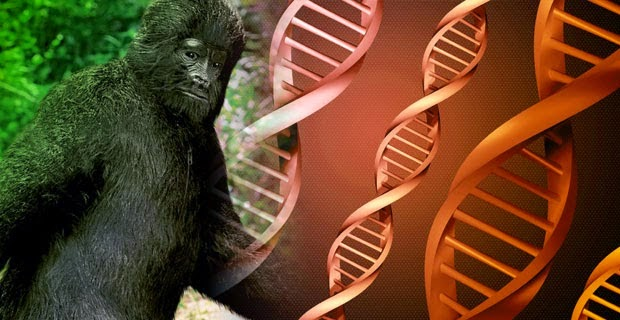 DNA Samples Sasquatch