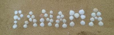 Muscheln im Sand in Panama