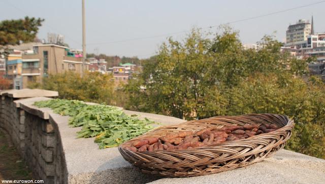 Batatas y grelos secándose al sol en la muralla de Seúl