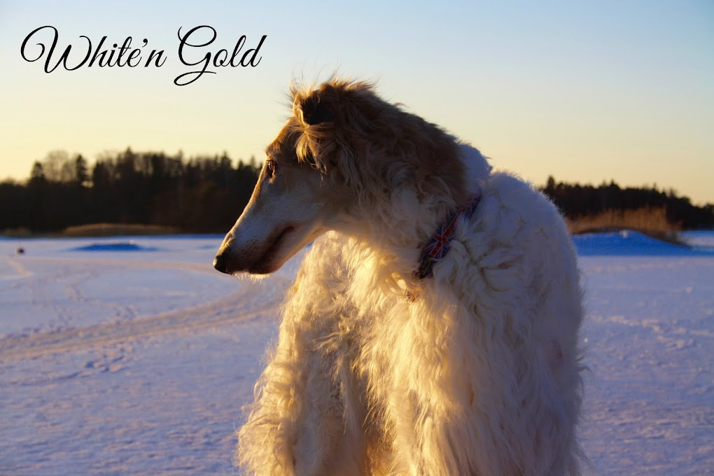 White'n Gold
