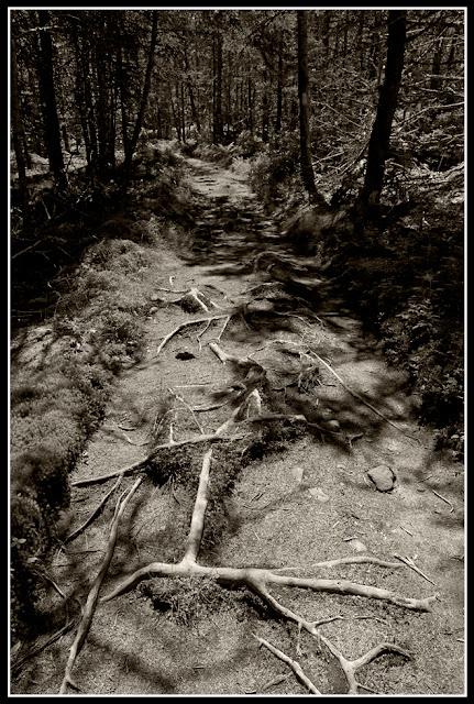 Nova Scotia; Gaff Point; Trail; Woods
