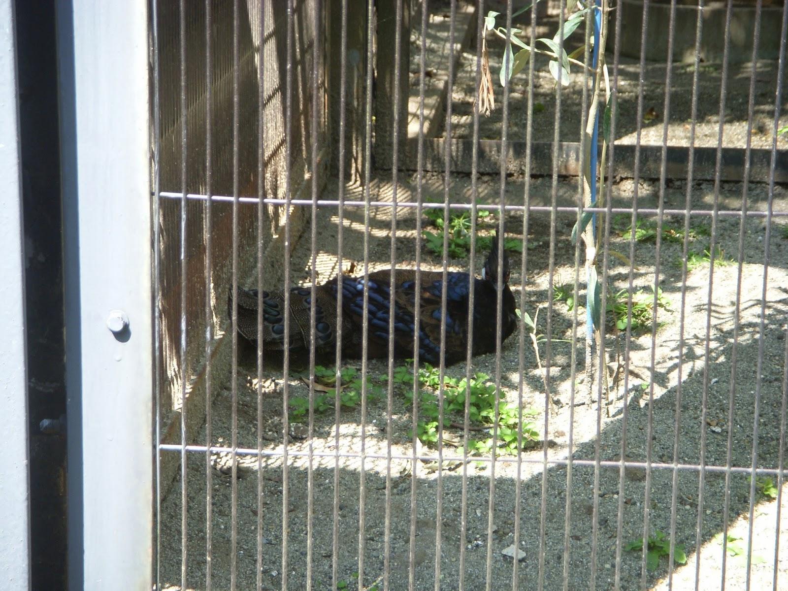 Raptormaniacs: Ueno Zoo Part I: East Garden Entrance