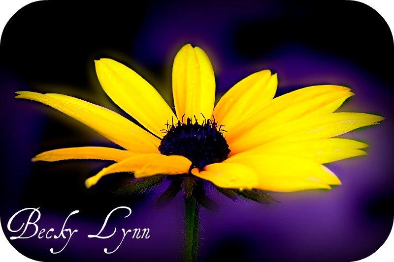 Becky Lynn Photography