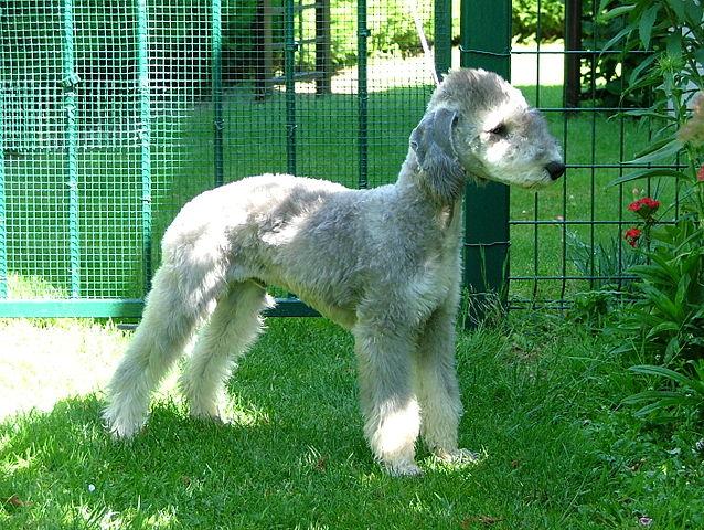 Top 10: raças de cachorros mais estranhas do mundo