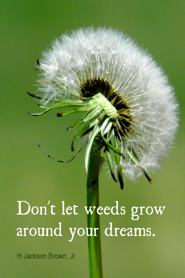 visual quote - image quotation for GOALS - Don't let weeds grow around your dreams. - H Jackson Brown Jr