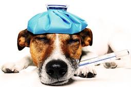 Ketika ustadz disuruh menyembuhkan anjing sakit di papua