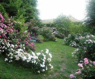 Informabellizzi bellizzi citt giardino - Giardino con rose ...