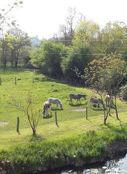 Nos ânes