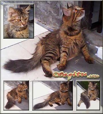 http://4.bp.blogspot.com/-NLC-hLdsznY/UtvO6Yd0-xI/AAAAAAAAAd4/I_YCRTzOjTk/s1600/kucing+anggora+mix+persia.jpg