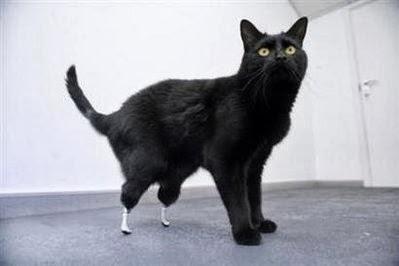 Primer gato biónico