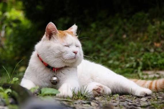 Video Anak Kucing Tidu...
