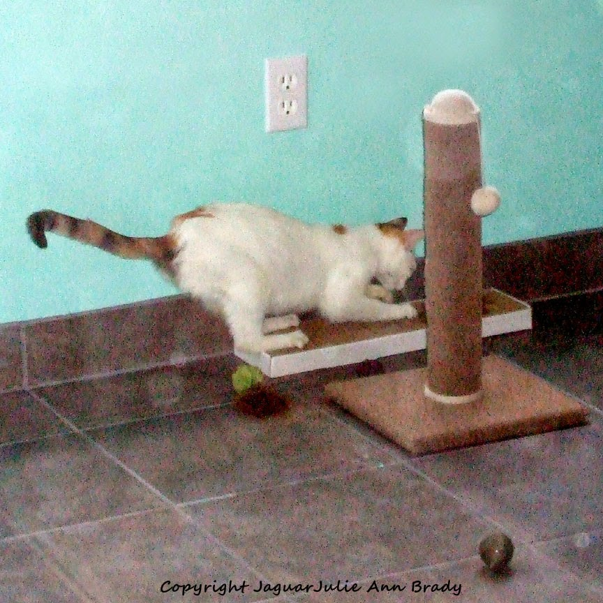 Mommy Cat on Pet Luv Cat Scratcher Board