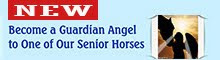 Become a Guardian Angel to a Senior
