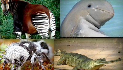 Some of the weird endangered species