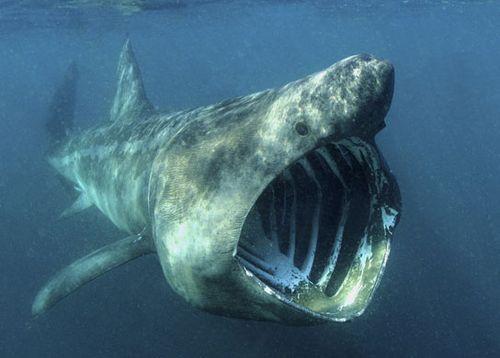 8 Hewan Laut Paling Mematikan di Dunia