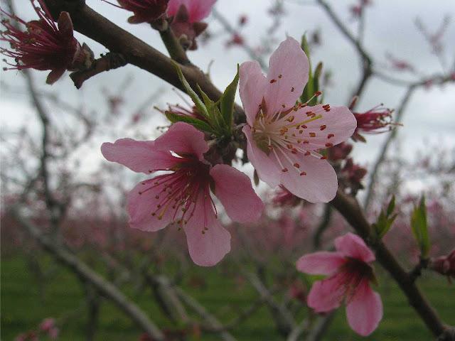 Blossoms Tea Room Larbert