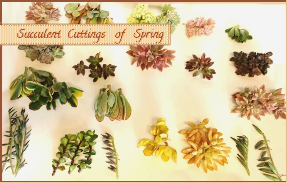 The Plan To Order Succulent Cuttings From An Online Nursery Has Been On Back Burner For Some Time Now About Two Weeks Ago We Finally Got Around