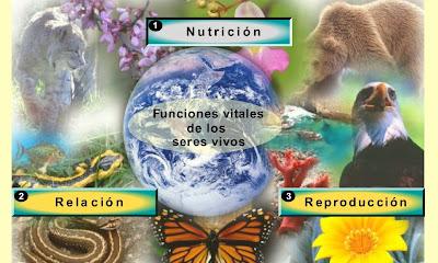 http://recursostic.educacion.es/secundaria/edad/1esobiologia/1quincena8/imagenes1/caract_servivo_dcha.swf