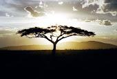 Sagesse Africaine