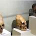 Aliens? Geneticista afirma que crânios encontrados no Peru não têm DNA humano
