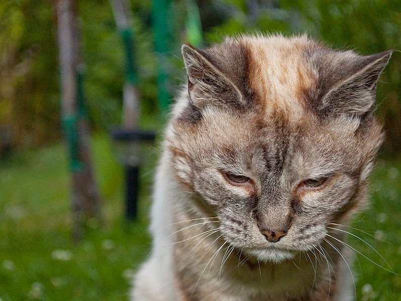 how to help old cats with arthritis