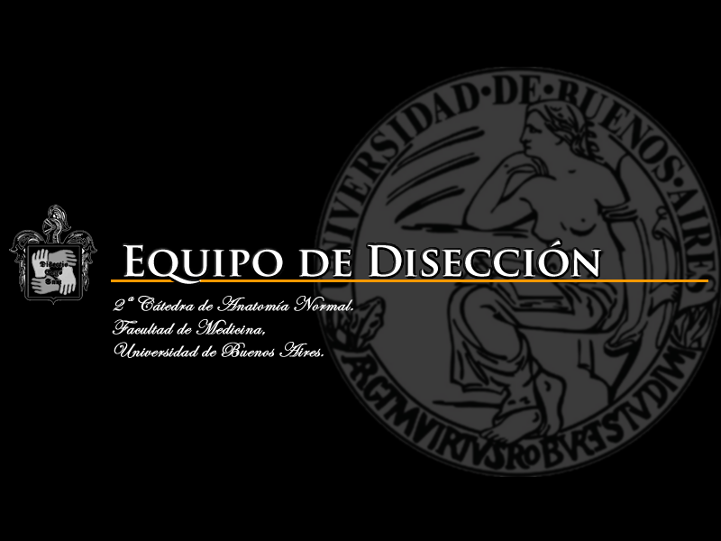 Equipo de Diseccion Facultad de Medicina Universidad de Buenos Aires