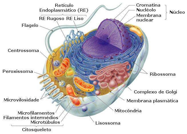 Célula Vegetal indicando sus partes