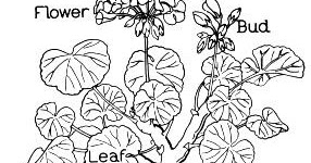 Parts Of A Flower Coloring Page