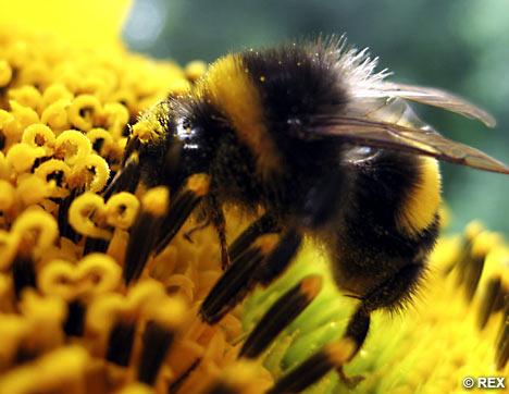 Bee & cee