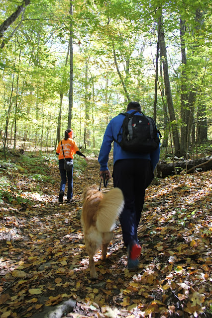 Hiking the Pequot Trails with your dog Lantern Hill Summit #walktober