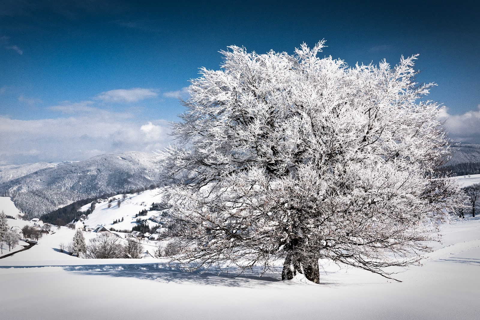 winter nature best wallpapers ever - photo #7