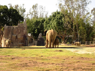 Elephants at San Diego Wild Animal Park