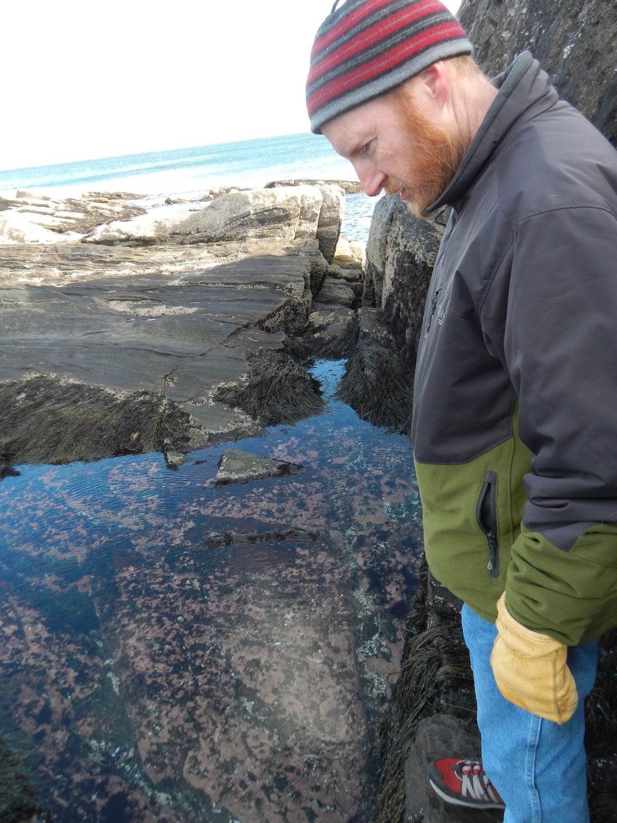 An ocean lover in maine tidepool explorations how to a tidepool in winter thats advanced tidepooling geenschuldenfo Image collections