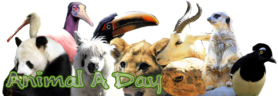 Animal A Day!