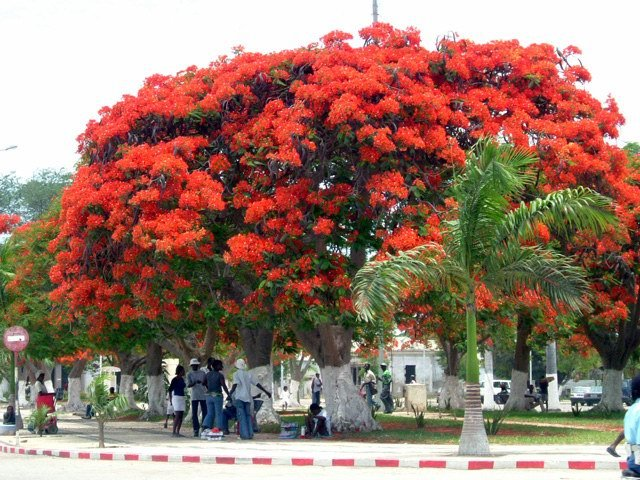 Pensar e Falar Angola Benguela  394 anos