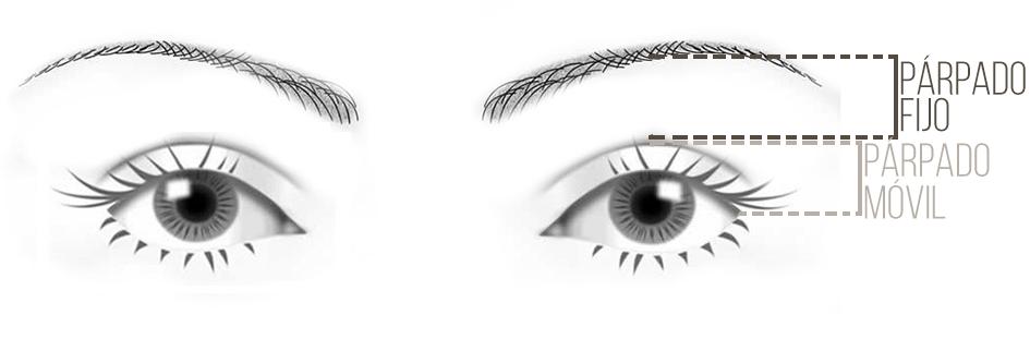 partes del ojo